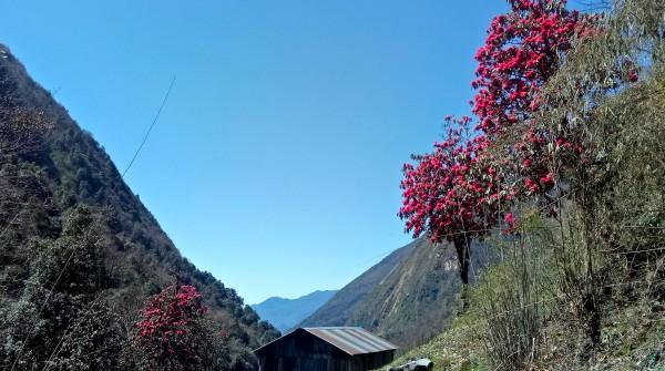 Spring Nepal